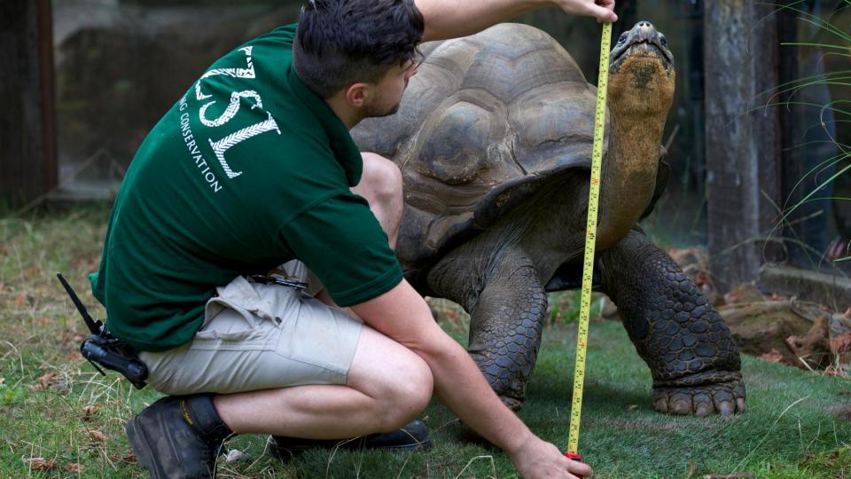 Aujourd'hui le zoo de Londres participe à un programme de recherche et de conservation des espèces.