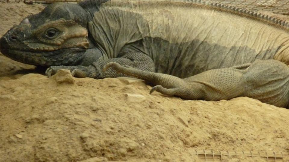 Les Reptiles Ces Nouveaux Animaux De Compagnie Wwwcnewsfr
